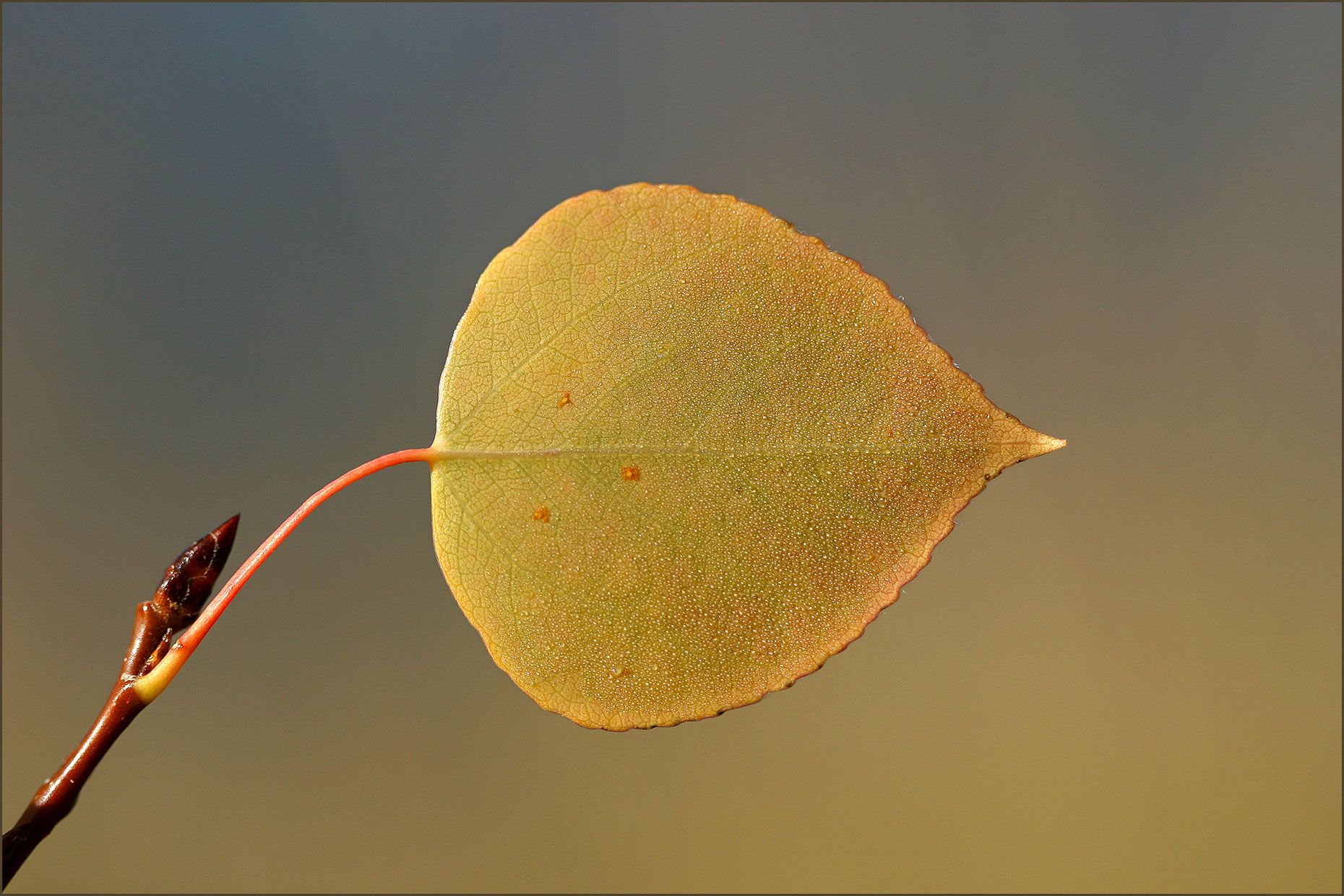 Solitary leaf, Canmore, Alberta, Canada